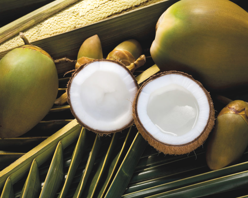 Coconut - Coprah Fruit and oil