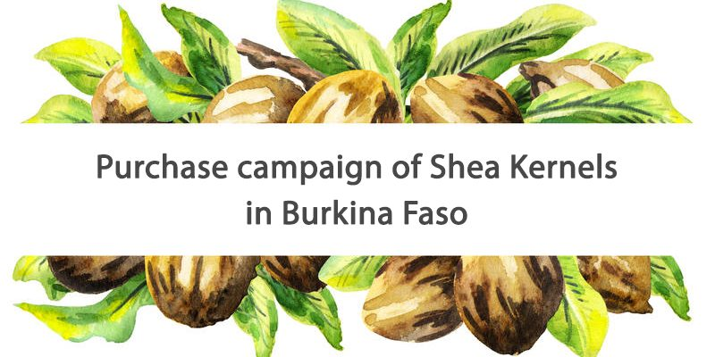 OLVEA - fairtrade shea butter supplier burkina faso africa